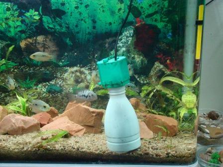 Делаем оленя на аквариума