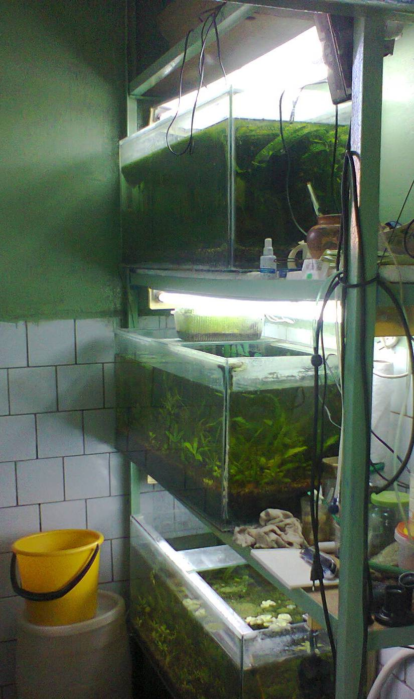 Тумба под аквариум своими руками: чертежи, фото, видео 87
